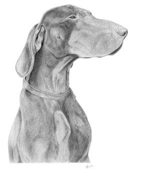 Illustratie duitse staande hond korthaar